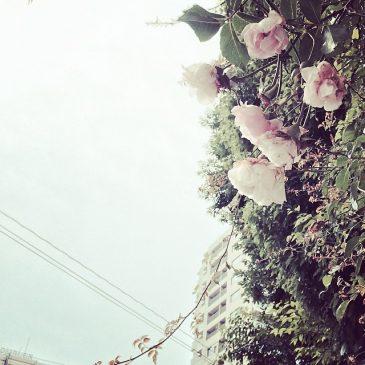 花も暑くて限界だって。