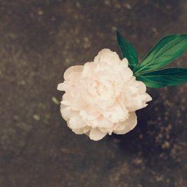 花になって散ってしまいたい。
