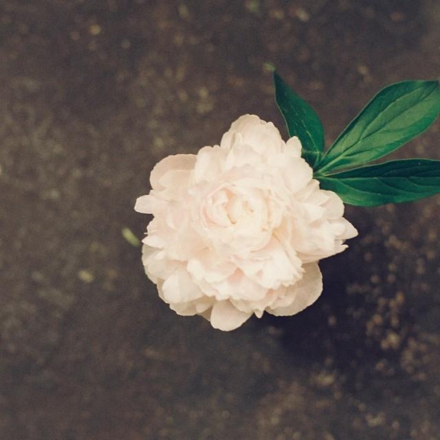 花になって散ってしまいたい。一度咲かないとね。 from iPhone