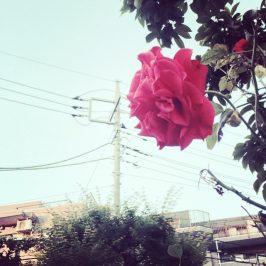 迷い道に赤い花。