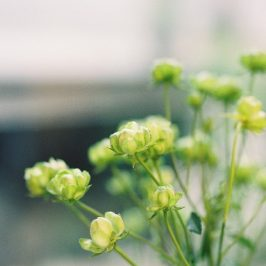 tocolierさんにて合同写真展「green」に参加してます。