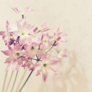 優しい花に優しい影。