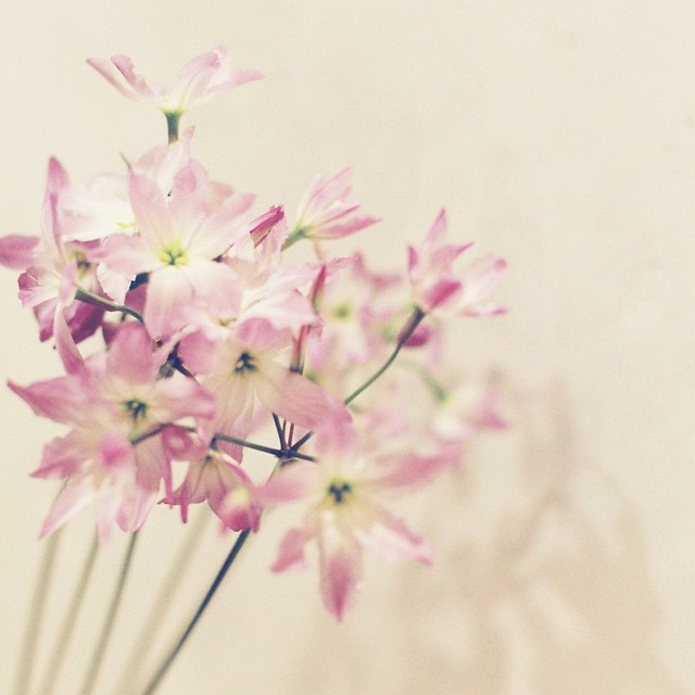 優しい花に優しい影。 from iPhone