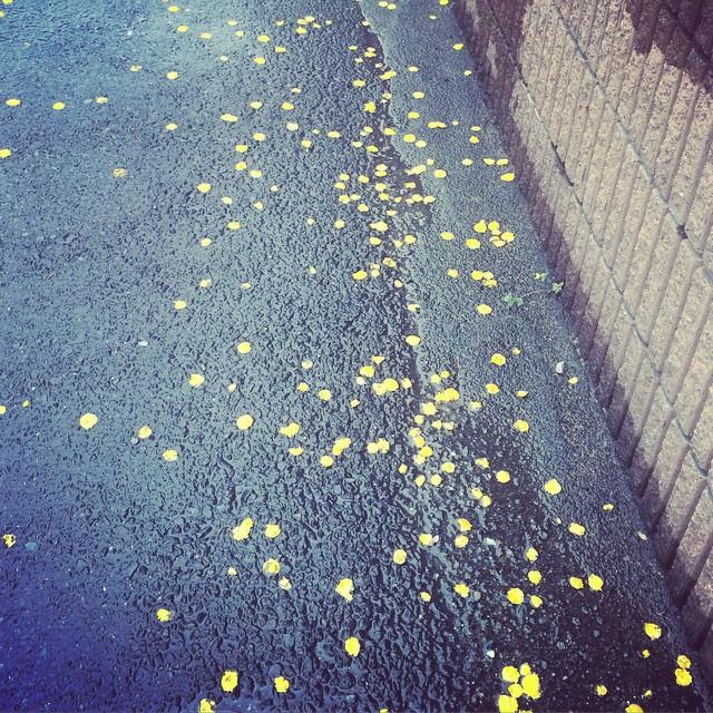 雨画伯は黄色がお好き。 from iPhone