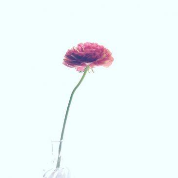 花とお礼。